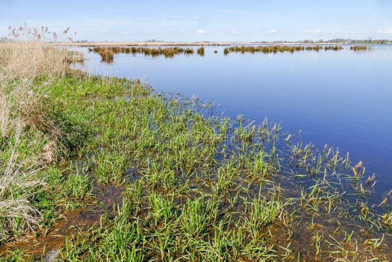 沼泽风景以自然沼泽地绿色Jonker 库存图片