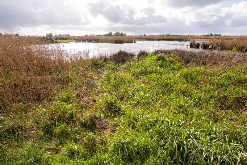 沼泽风景以自然沼泽地绿色Jonker 免版税库存照片