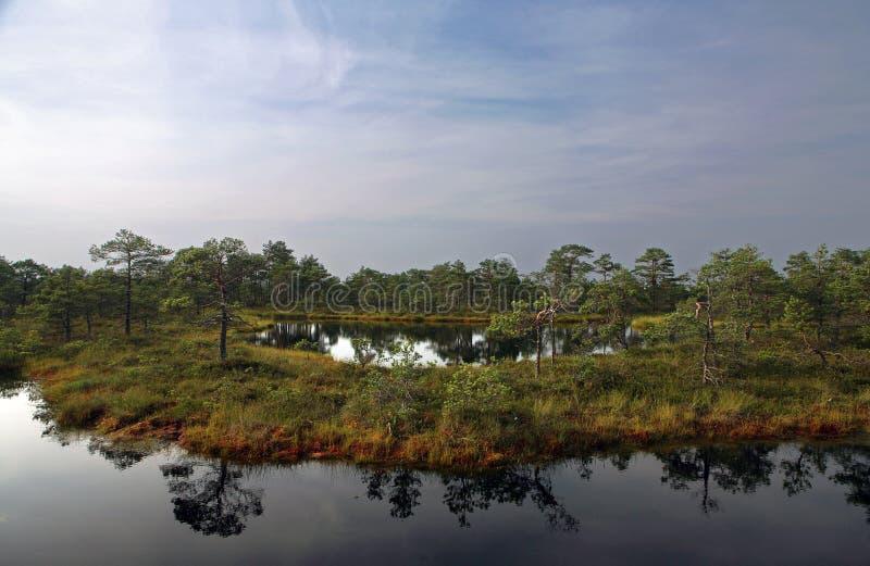 沼泽 库存图片