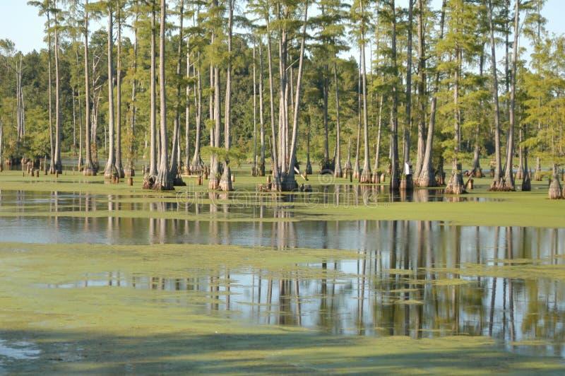 沼泽 免费图库摄影