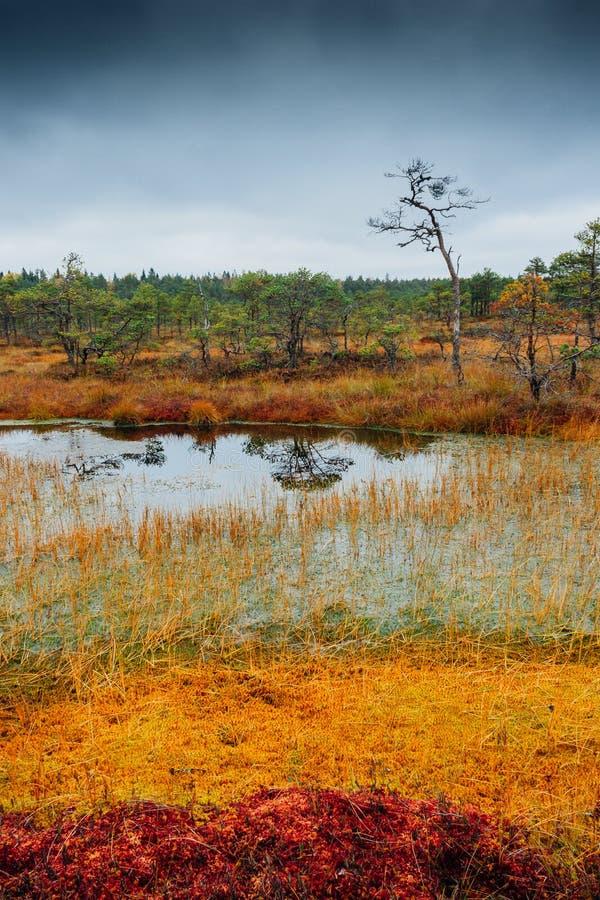 沼泽Kakerdaja在爱沙尼亚 库存图片