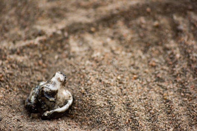 沾染在沙子的塑料被烧的片断与踪影人的鞋子 库存图片
