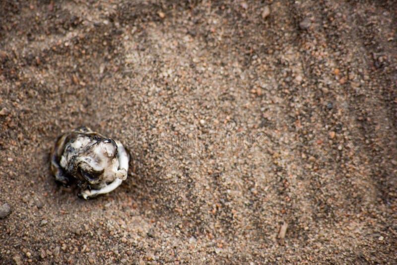 沾染在沙子的塑料被烧的片断与踪影在上面的人的鞋子 免版税库存照片