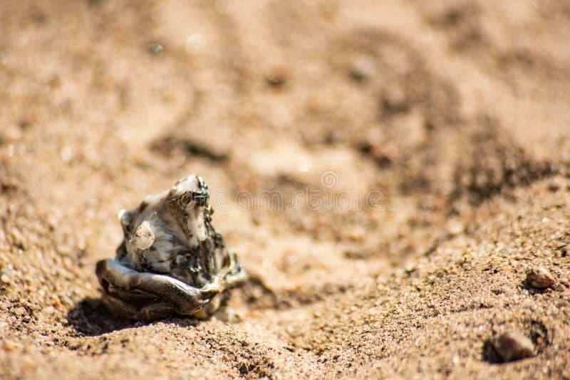 沾染在沙子的塑料被烧的片断  免版税库存图片