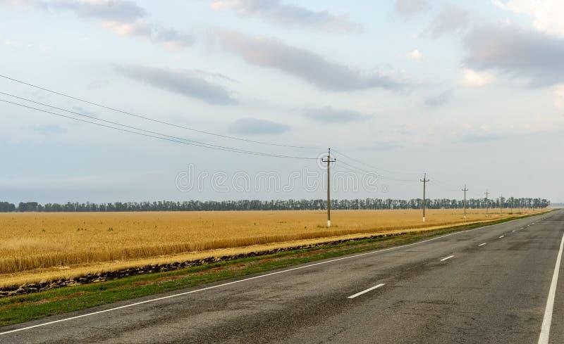 沿一个小麦领域的边缘的路在天空蔚蓝背景的 库存图片