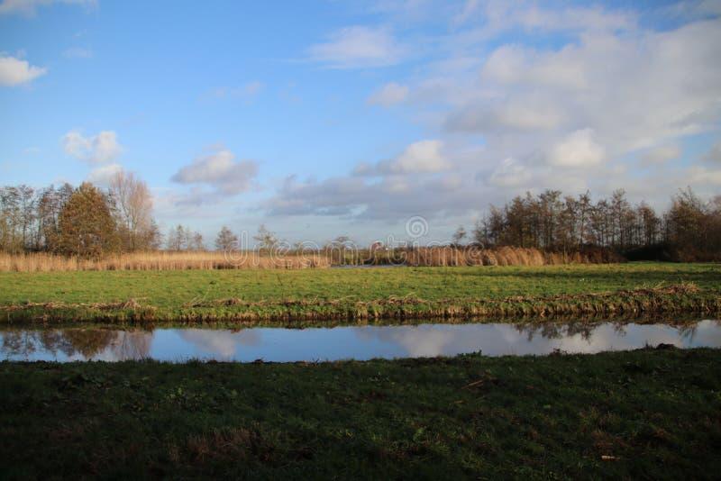 沿一个水池的布朗芦苇在秋天期间在度假区在Nieuwerkerk aan小室IJssel说出Park Hitland名字在荷兰 库存图片