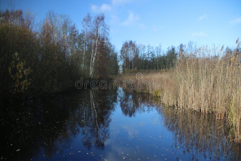 沿一个水池的布朗芦苇在秋天期间在度假区在Nieuwerkerk aan小室IJssel说出Park Hitland名字在荷兰 免版税库存图片