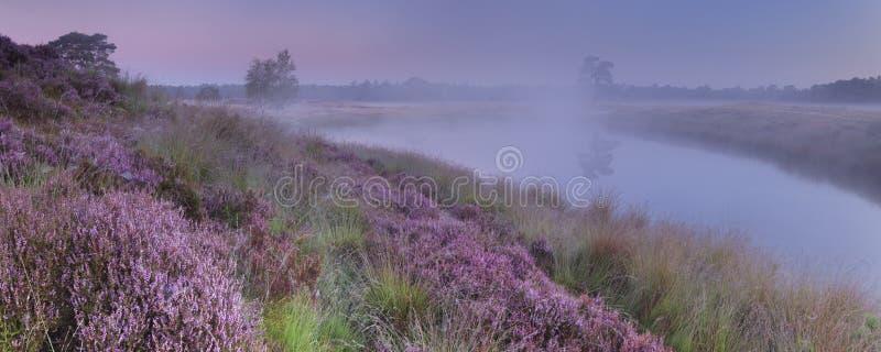 沿一个湖的开花的石南花在黎明 免版税图库摄影