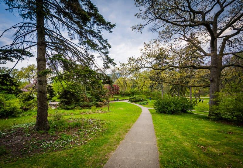 沿一个走道的树在高公园,在多伦多,安大略 图库摄影