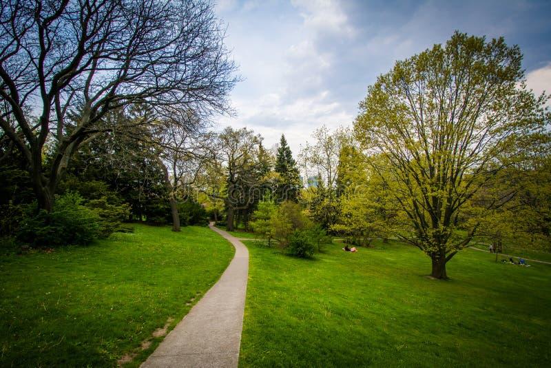 沿一个走道的树在高公园,在多伦多,安大略 库存图片
