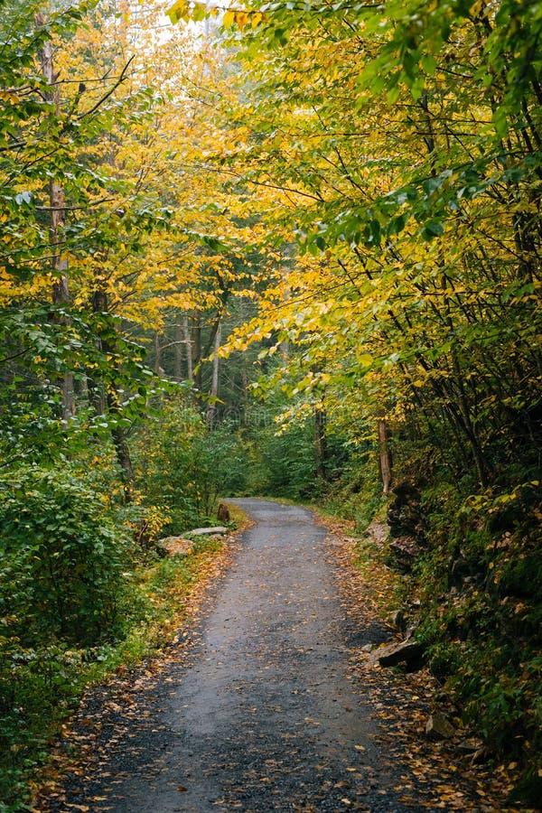 沿一串足迹的早秋天颜色,在Minnewaska国家公园,Shawangunk山的,纽约 库存照片