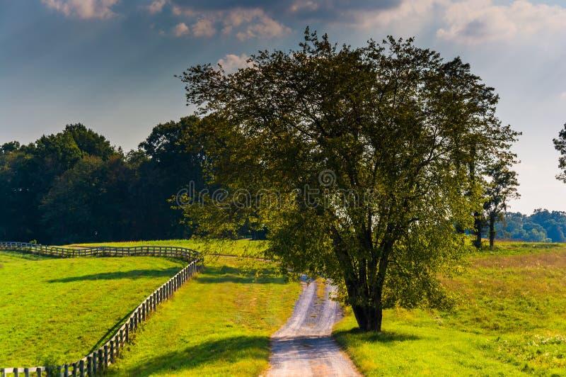 沿一条土路的树在农村霍华德县,马里兰 免版税库存图片