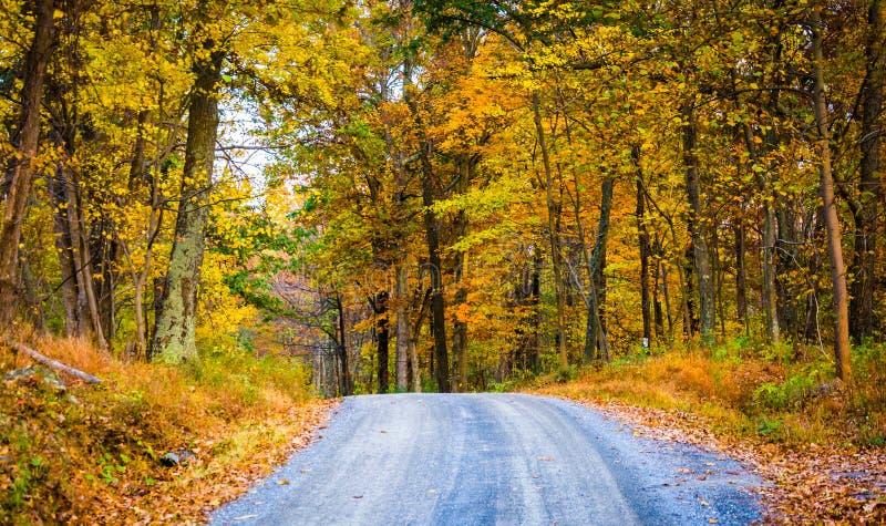沿一条土路的秋天颜色在弗雷德里克县,马里兰 免版税库存照片