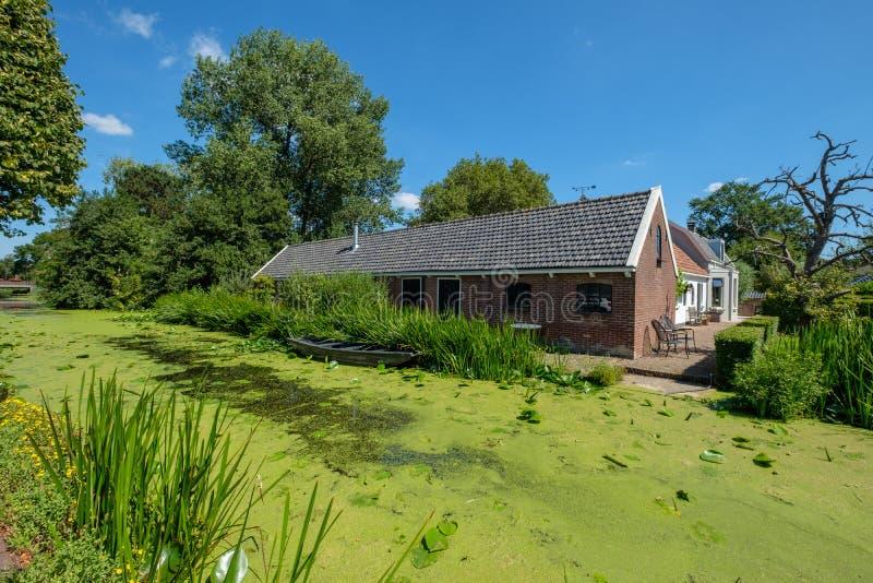 沿一条运河的一个老农场有许多的浮萍在Maasland, 免版税库存照片