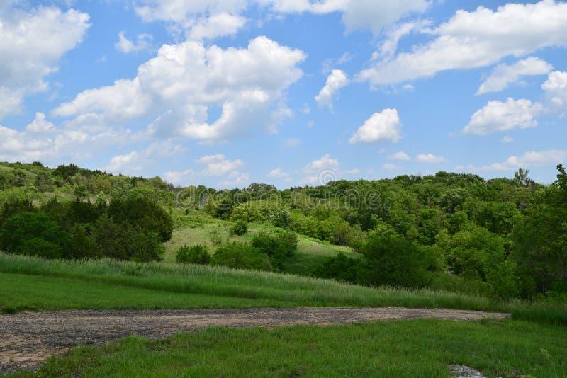 沿一条道路的豪华的绿色树在俄勒冈试验自然公园在堪萨斯 免版税库存照片