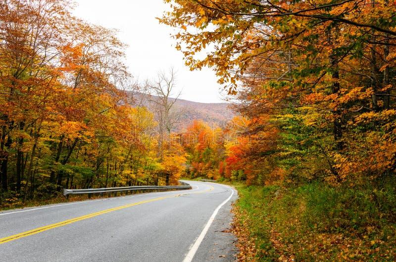 沿乡下公路的五颜六色的autumncolours 库存图片