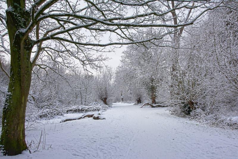 沿光秃的在雪盖的冬天树和灌木的道路 图库摄影