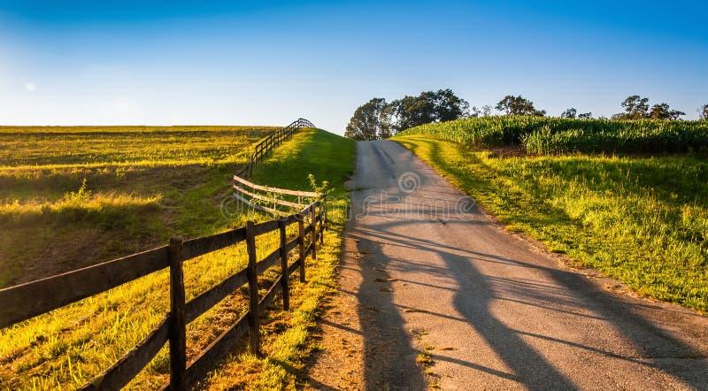 沿农场马路的篱芭在农村约克县,宾夕法尼亚 图库摄影
