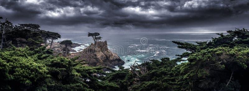 沿加利福尼亚海岸的孤立柏树 库存图片