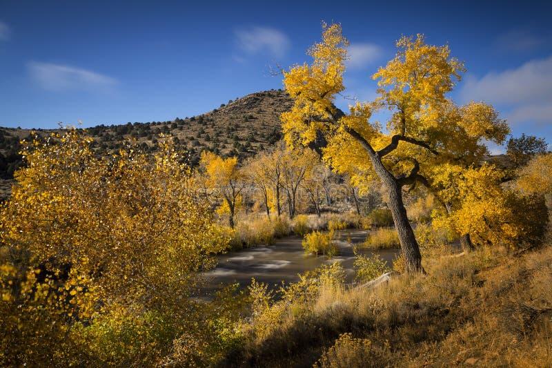 沿卡森河的秋天颜色在卡森市,内华达附近 免版税库存照片