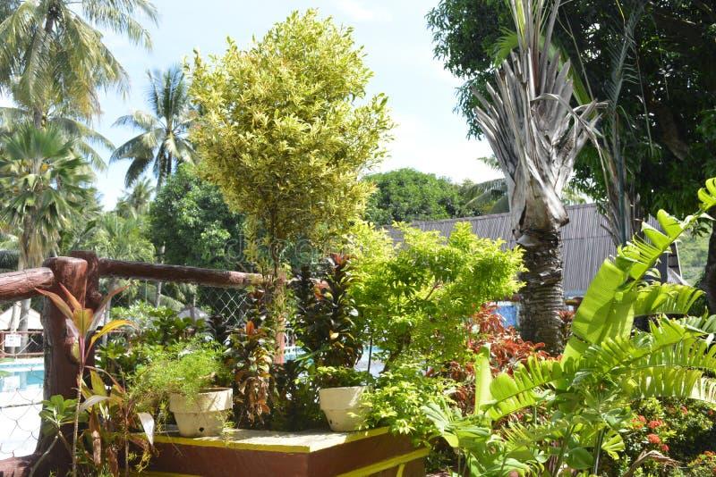 沿圣Vali, Digos市,南达沃省,菲律宾游泳池的植物  库存照片