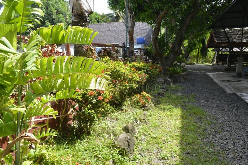 沿圣Vali, Digos市,南达沃省,菲律宾游泳池的植物  免版税库存图片