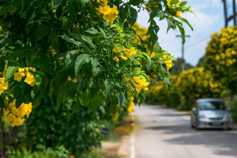 沿城市街道的黄色花 库存照片