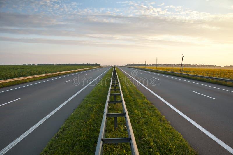 沿域高速公路向日葵 免版税库存照片