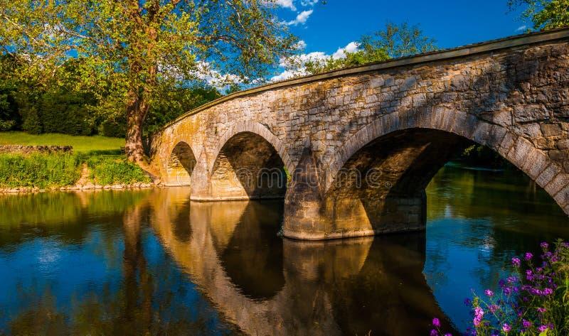 沿安提俄珀Creek和Burnside桥梁的花,在Antietam国民战场 免版税库存照片