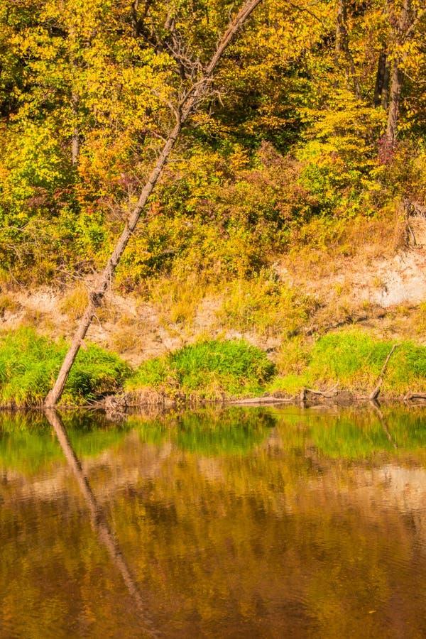 沿小的土耳其河的秋叶 免版税图库摄影