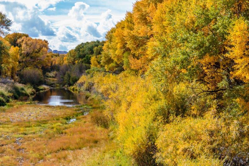 沿怀俄明河的秋天白杨木 免版税库存图片