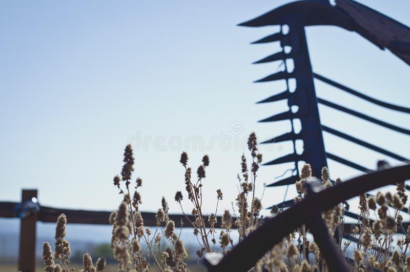 沿木篱芭的干燥desret杂草 免版税库存图片
