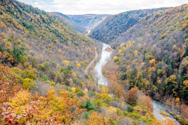 沿杉木小河的秋天颜色 免版税库存照片