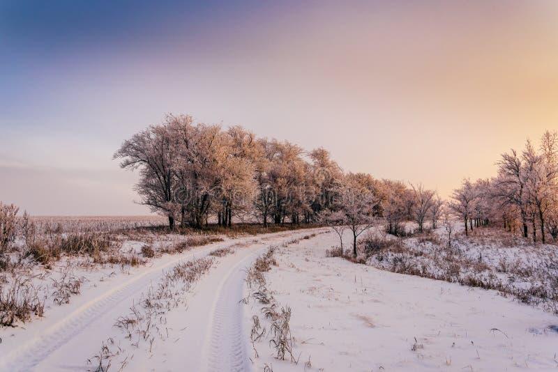 沿树的冬天路在日落光 库存照片