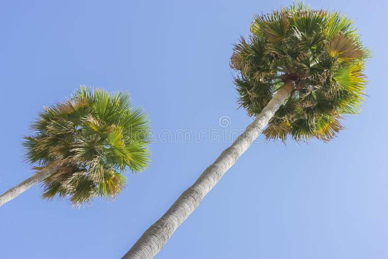 沿棕榈海散步在马尔韦利亚安达卢西亚西班牙 免版税图库摄影