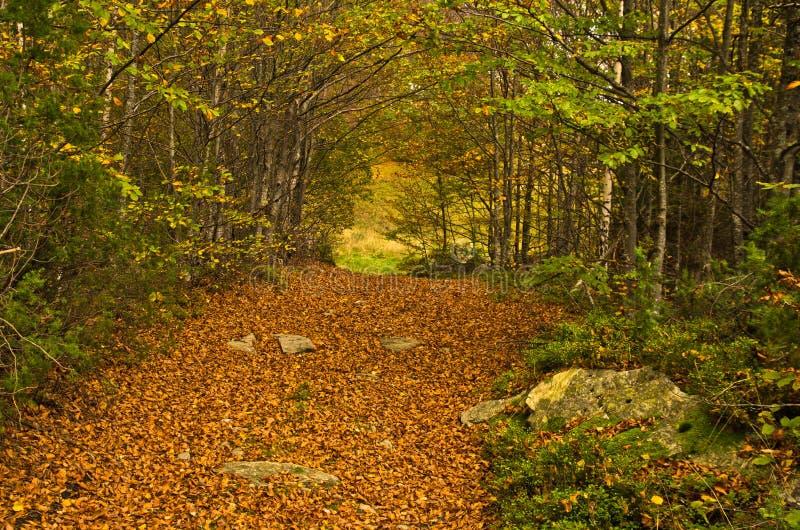 沿森林山路秋天, Radocelo山的很多下落的叶子 库存照片