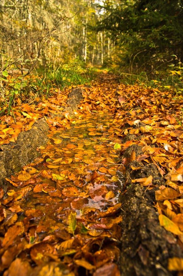 沿森林山路秋天, Radocelo山的很多下落的叶子 免版税库存图片