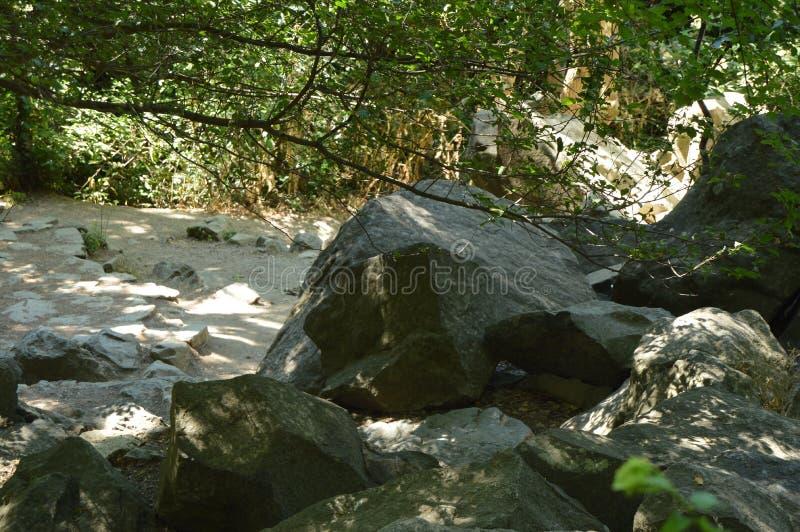 沿森林道路的大石头在树丛林  库存照片