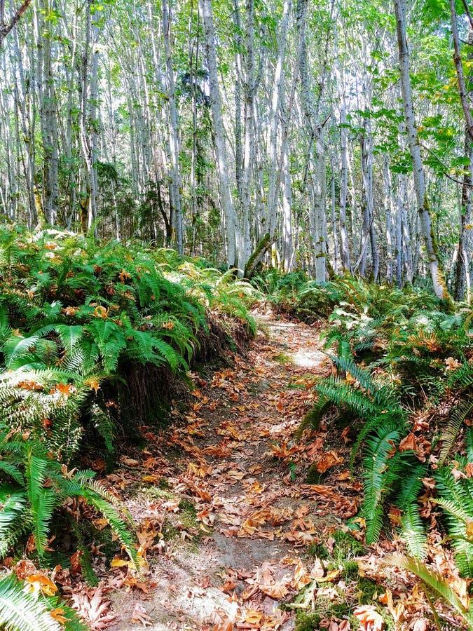 沿森林道路驱散的秋叶 免版税库存图片