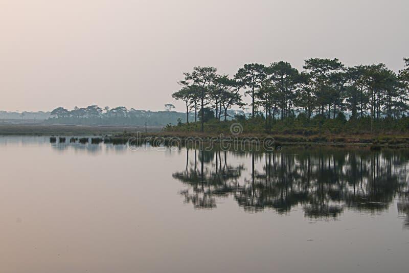 沿水库的杉树 图库摄影