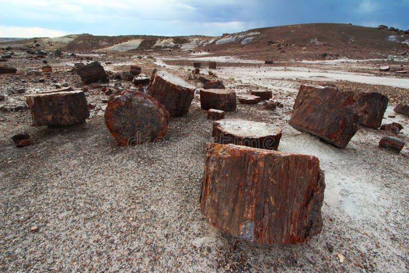沿水晶森林供徒步旅行的小道的木石化在化石森林国家公园,亚利桑那,美国 库存图片