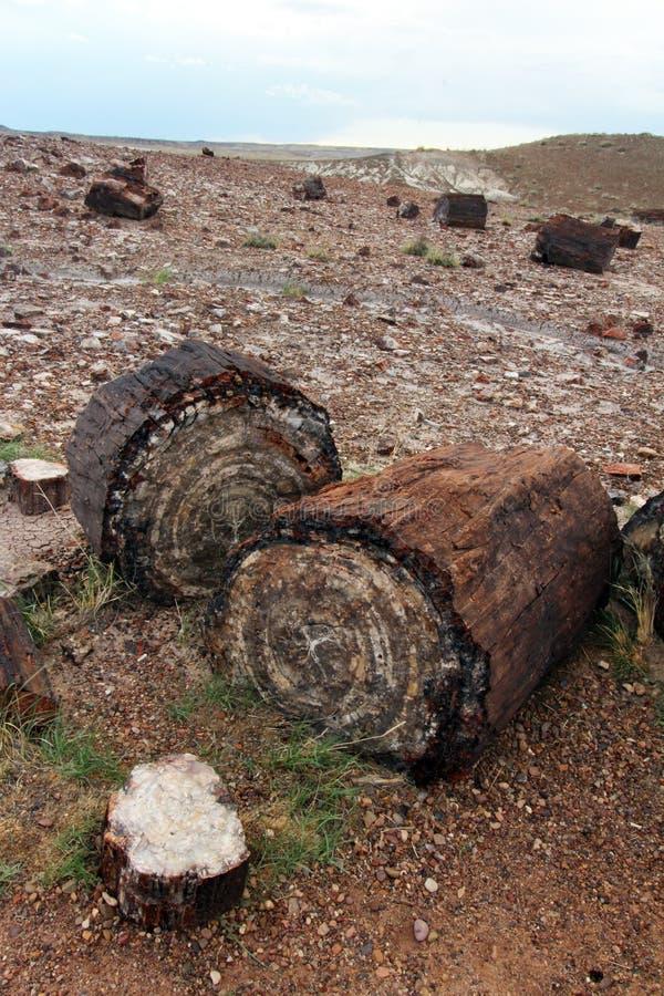 沿水晶森林供徒步旅行的小道的木石化在化石森林国家公园,亚利桑那,美国 图库摄影
