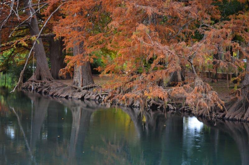 沿河岸的秋天树 库存照片
