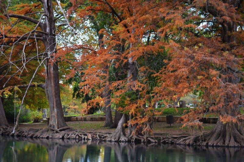 沿河岸的秋天树 库存图片