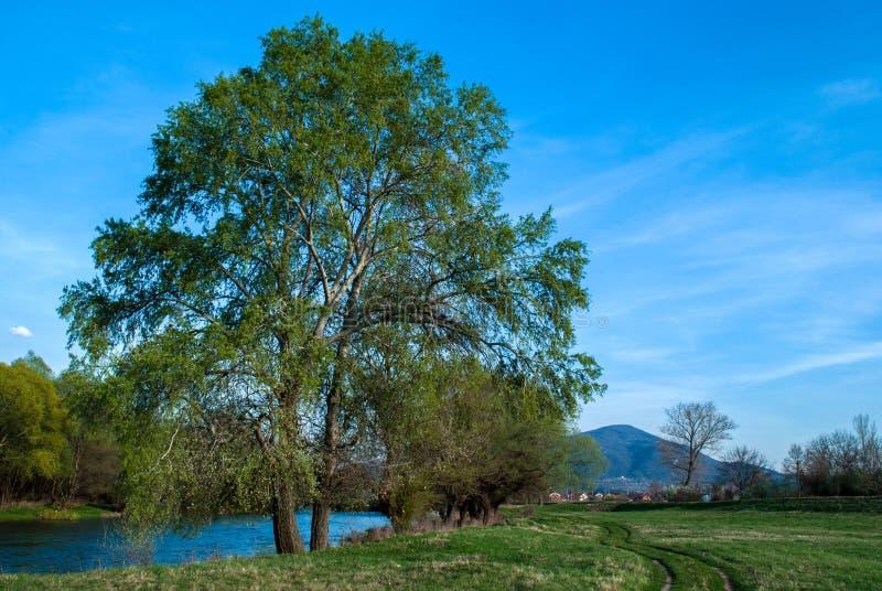 沿河的树在堤坝附近的一个春日 免版税库存图片