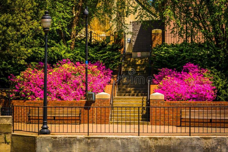 沿河边区运河步行的春天颜色在里士满,维尔京 图库摄影