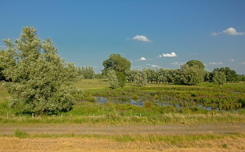 沿泥煤湖的土路在Kalkense Meersen自然reerve,富兰德,比利时的沼泽地风景树的 免版税库存照片