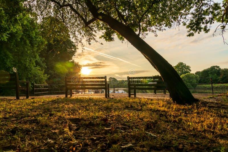 沿泰晤士的公园长椅日出的 免版税图库摄影