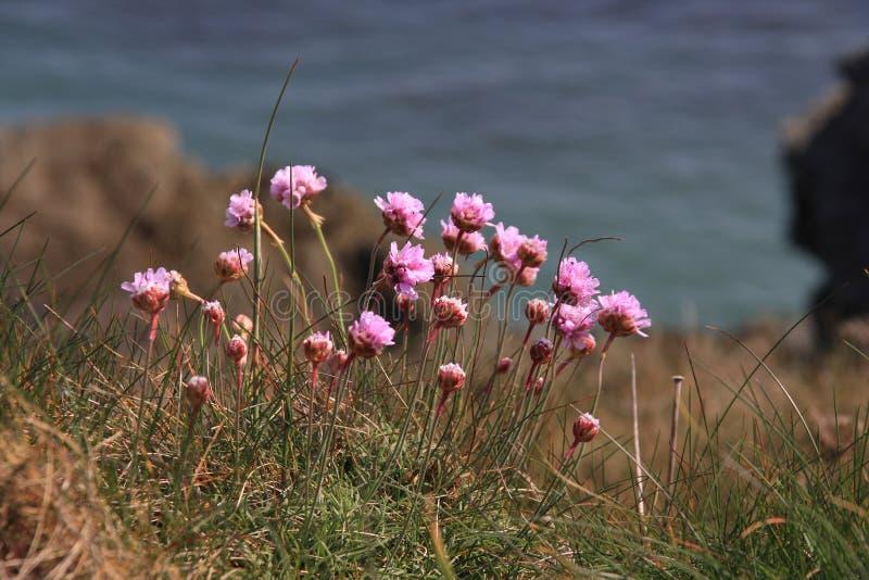 沿海动物区系植物群 图库摄影