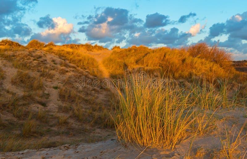 沿海在奥斯坦德,比利时的沙丘 库存照片